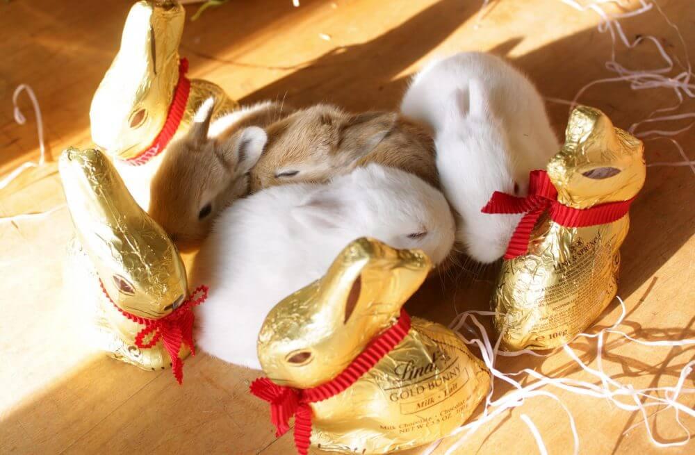 Bunnies on Easter. (Source: Flickr, Rick&Brenda Beerhorst)